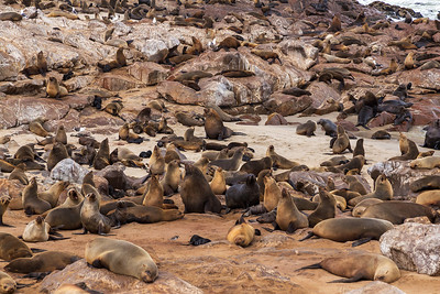 Cape Cross, Namibia A Cape Fur Seal colony at Cape Cross.