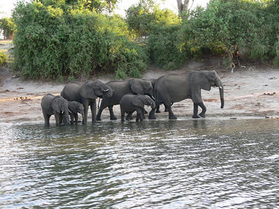 Nov 21 - Chobe cruise