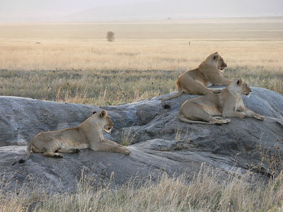 October 31, lions
