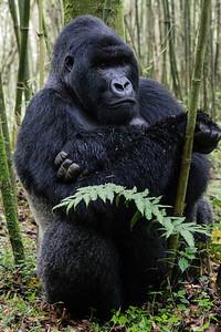 Sbrand_Africa_Rwanda_7238
