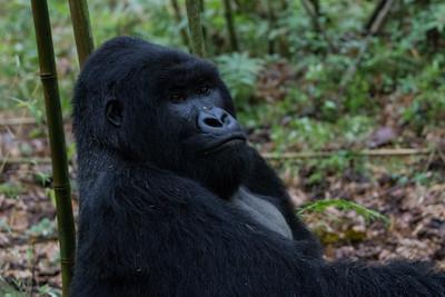 Sbrand_Africa_Rwanda_7309