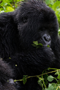 Sbrand_Africa_Rwanda_7778