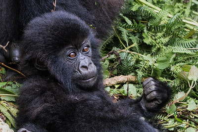 Sbrand_Africa_Rwanda_6937