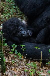 Sbrand_Africa_Rwanda_7434