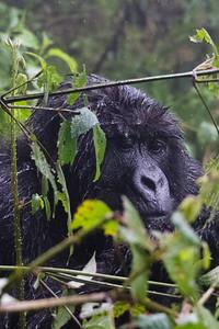 Sbrand_Africa_Rwanda_7573