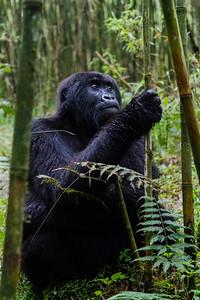 Sbrand_Africa_Rwanda_7206