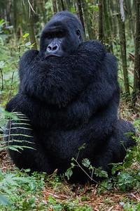 Sbrand_Africa_Rwanda_7179