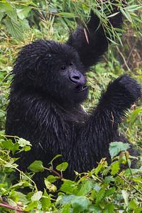 Sbrand_Africa_Rwanda_7633