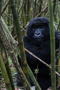 Sbrand_Africa_Rwanda_7235