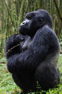 Sbrand_Africa_Rwanda_7157