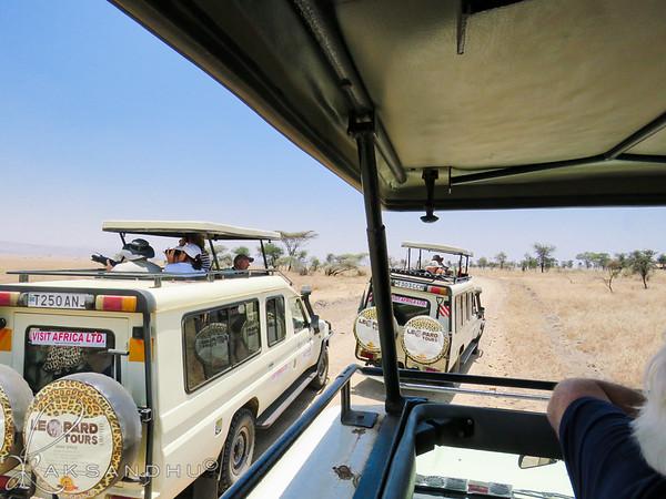 SafariTroop-009