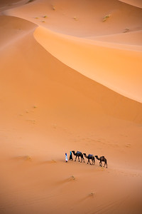 Rounding up Camels