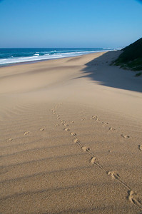 Tracks in the sand dunes