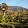 Constantia region in the southern suburbs of Cape Town (this is where the first vineyards were planted in South Africa)