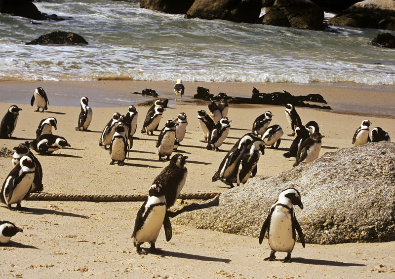 Capetown. Boulder beach