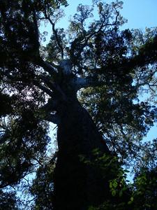 big_tree_05