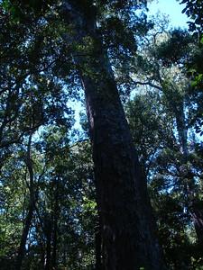 big_tree_02