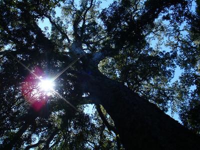big_tree_03