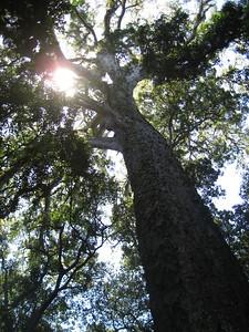 big_tree_04