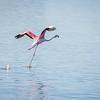 Zandvlei Bird Sanctuary,False Bay Nature Reserve, Cape Town, South Africa, 2015