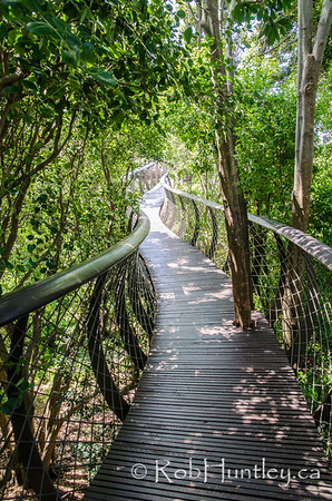 Tree canopy walkway at Kirstenbosch National Botanical Garden