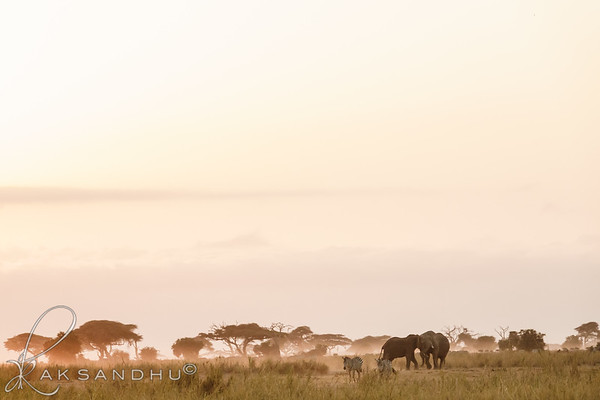 SunInAfrica-020