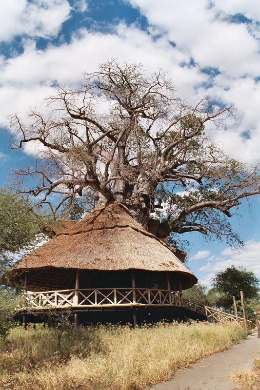 Tanzania 2004 (Part 1)