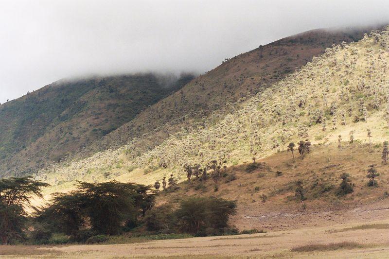 Ngorongoro Crater - Hillside of Cactus Plants