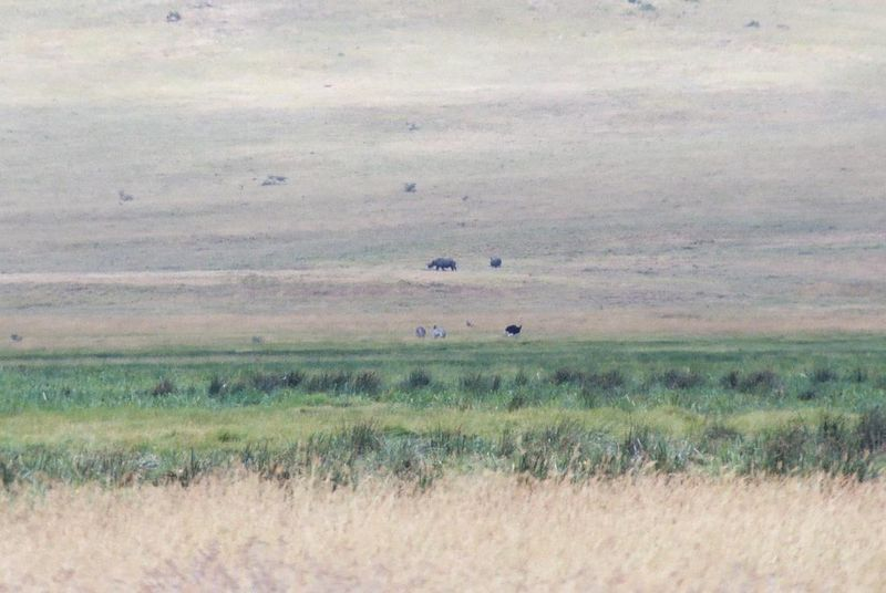 Ngorongoro Crater - This Was Our Only View of Rhinos