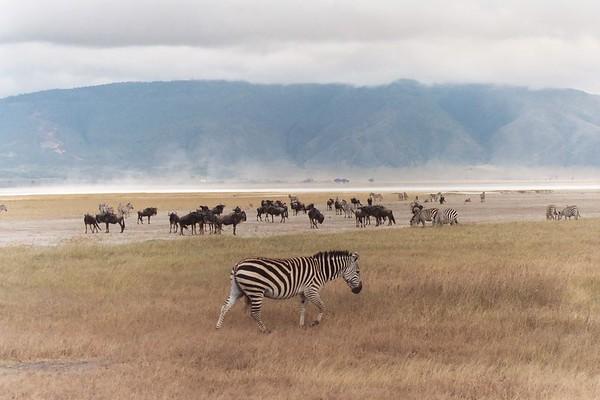 Tanzania 2004 (Part 2)