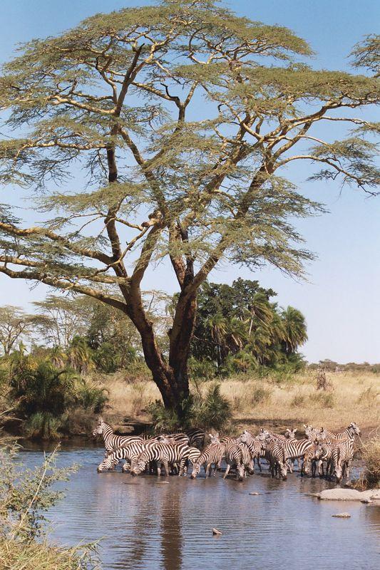 Serengeti NP - Beautiful Serengeti Scene