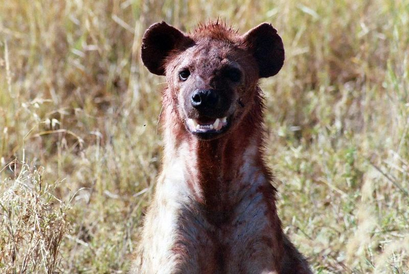 Serengeti NP - The Stuff of Nightmares!