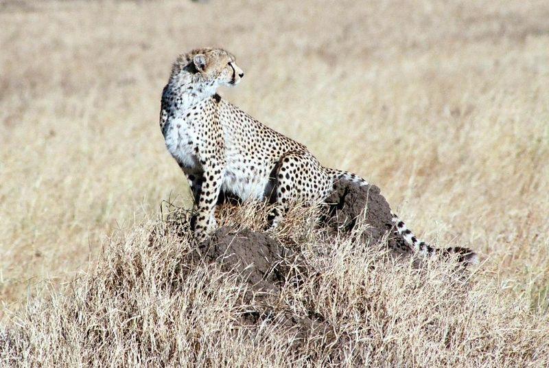 Serengeti NP - Those Gazelles Look Interesting!