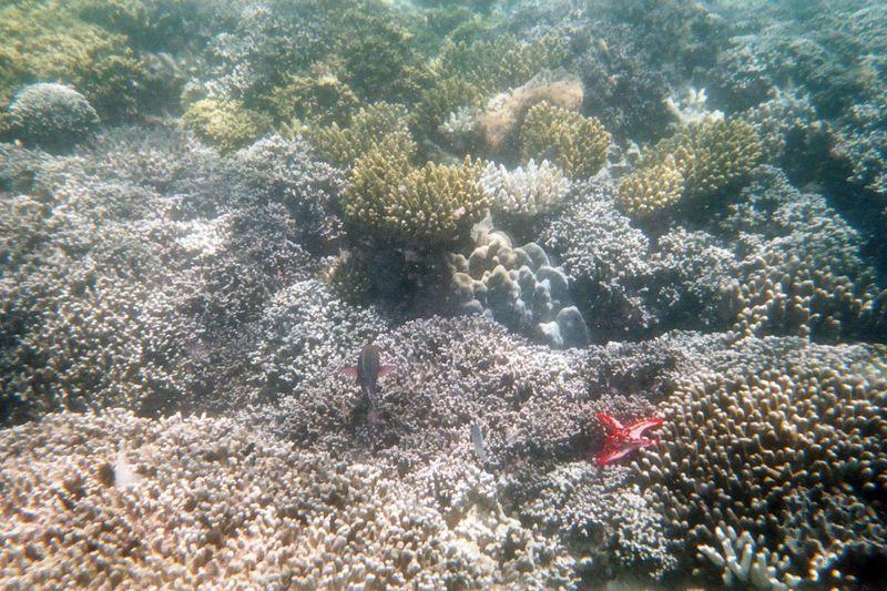 Prison Island Snorkeling - Cruising the Reef