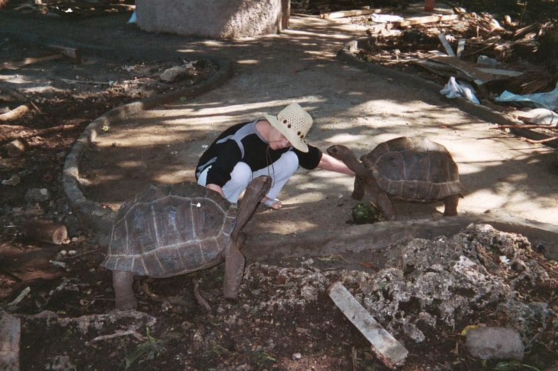 Aleida Was Quite Popular. The Tortoises Really Liked Being Scratched On Their Legs and Necks.
