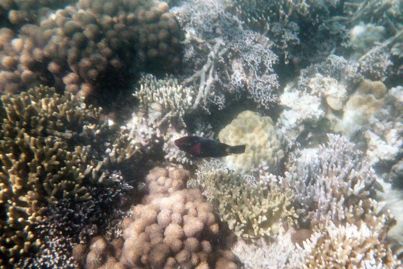 Prison Island Snorkeling - Parrotfish