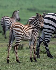 Tanzania Kenya 2018