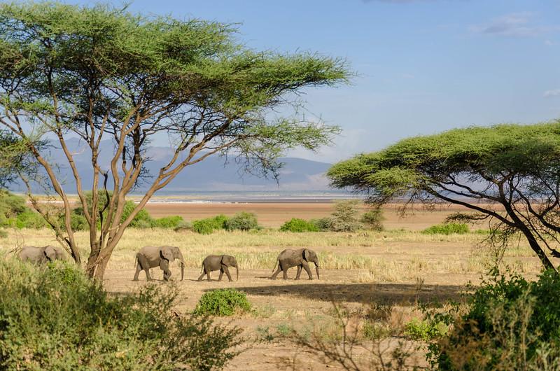 Elephants, Lake Manyara National Park