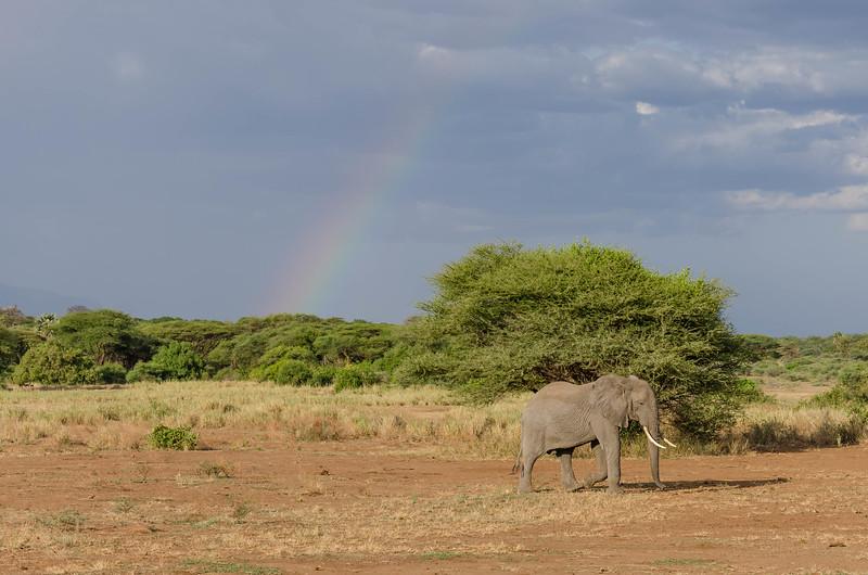 Elephant, Lake Manyara National Park