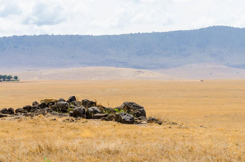Lioness on Rocks, Ngorongoro Crater
