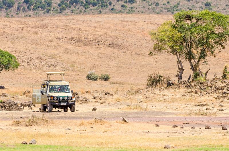 Warthog & Safari Truck