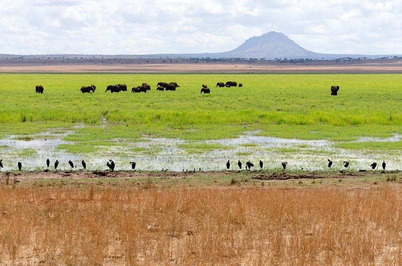 Elephants in Swamp