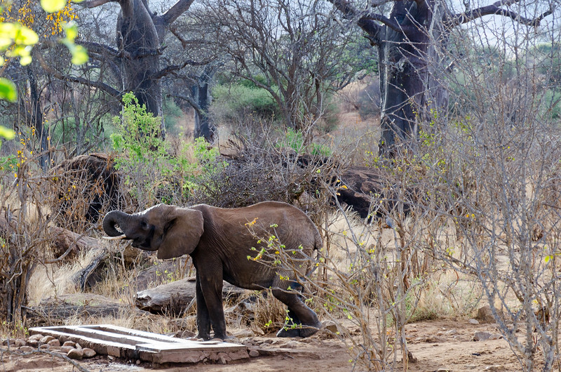 Elephants at Sopa Lodge Waterhole