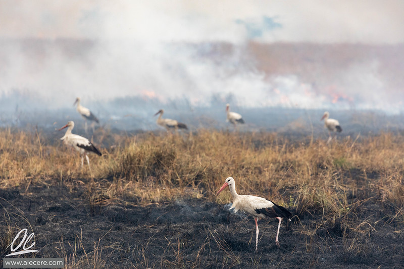 Fire Ecology of Serengeti