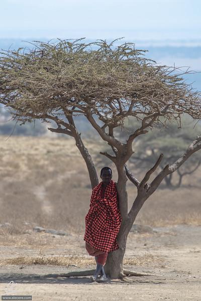Maasai under the tree