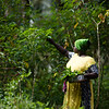 A female farmer collects tapioca leaves for cooking at Maganga Spice Farm in Zanzibar, Tanzania.