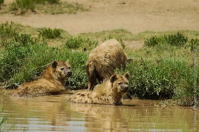 Hyena Bathtime