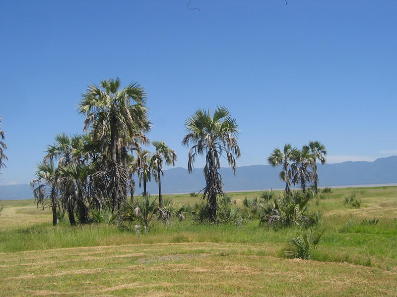 Maramboi Camp Surrounded by Palms