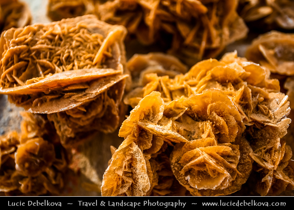 Northern Africa - Tunisia - Chott el Djerid - Large endorheic desert salt lake in southern Tunisia near towns of Kebili and Douz - Desert Rose - Rosette formations of crystal clusters of gypsum or baryte which contain abundant included sand grains