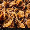 Northern Africa - Tunisia - Sahara Desert - الصحراء الكبرى - The Greatest Desert - Desert Rose - Rosette formations of crystal clusters of gypsum or baryte which contain abundant included sand grains